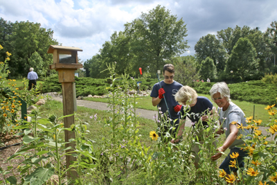 081915_Pollinator_0123_web